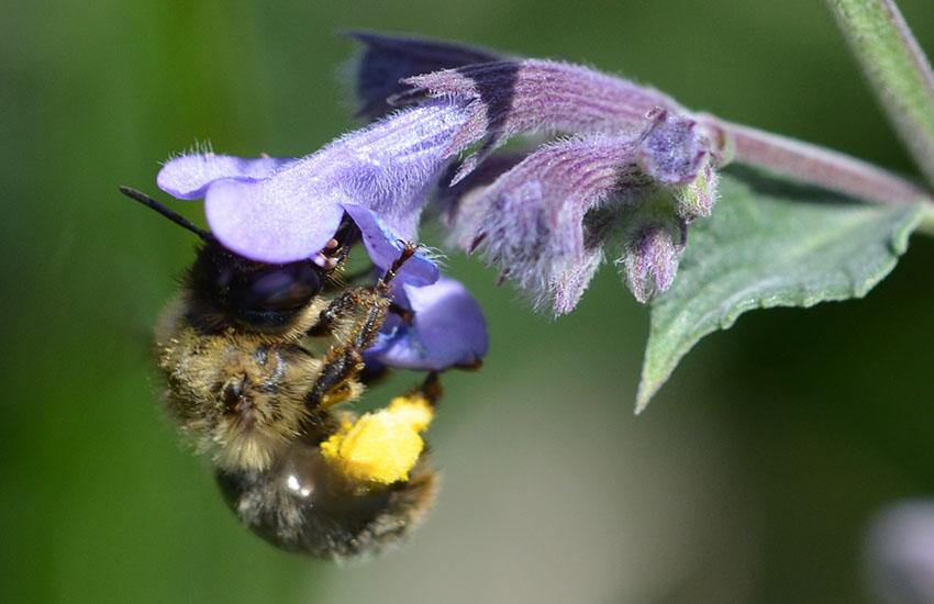 EINLADUNG: Vortrag zum Bienen-Schutz im Kloster Reisach